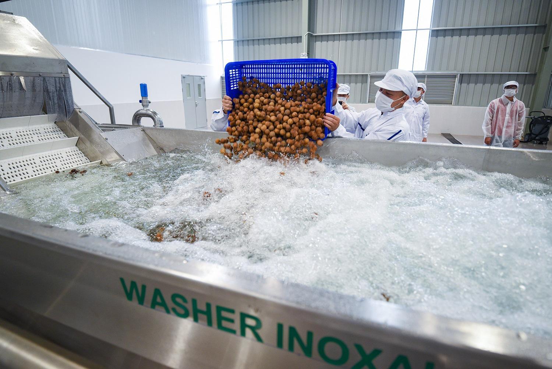 """Sơn La: Bên trong nhà máy chế biến hoa tươi và thảo dược thuộc tốp """"khủng"""" nhất đất Việt - Ảnh 4."""