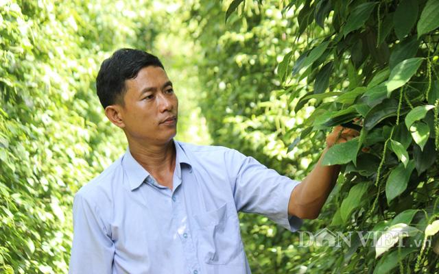 CLip Giám đốc trẻ và mơ ước chế biến hồ tiêu hữu cơ cho người Việt - Ảnh 2.