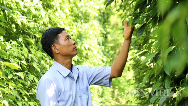 CLip Giám đốc trẻ và mơ ước chế biến hồ tiêu hữu cơ cho người Việt - Ảnh 16.