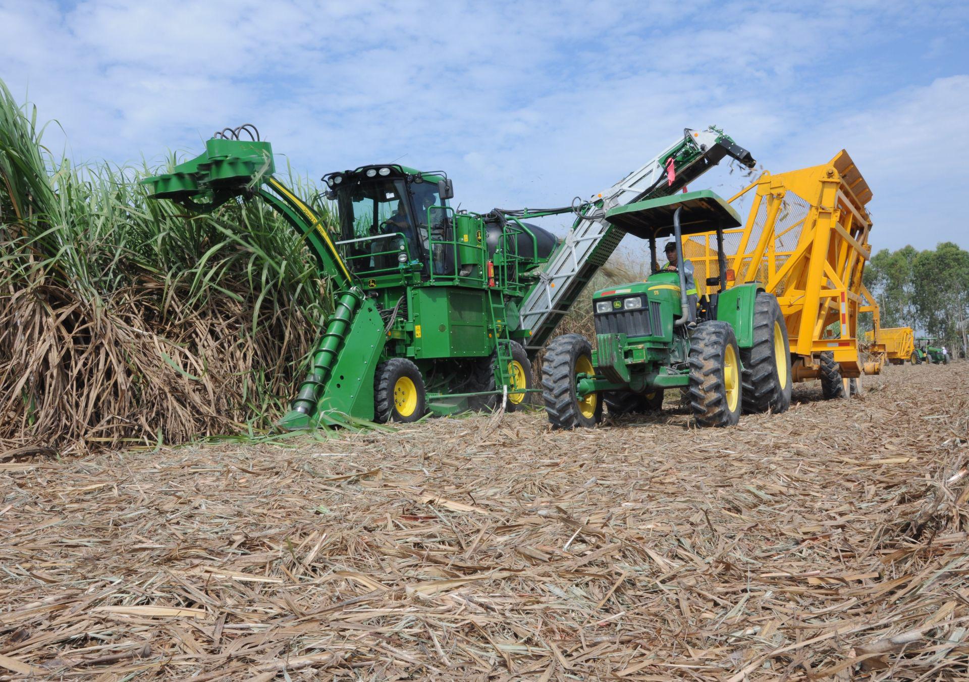 Nghịch lý ngành mía đường: Sản xuất 700.000 tấn, nhập khẩu 2 triệu tấn - Ảnh 3.