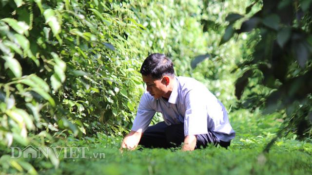 CLip Giám đốc trẻ và mơ ước chế biến hồ tiêu hữu cơ cho người Việt - Ảnh 4.