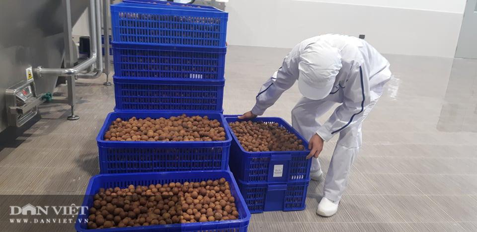 Nhà máy chế biến hoa quả tươi hiện đại nhất Tây Bắc chuẩn bị hoạt động - Ảnh 2.