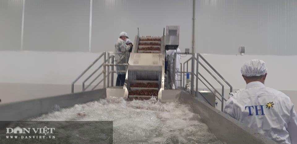 Nhà máy chế biến hoa quả tươi hiện đại nhất Tây Bắc chuẩn bị hoạt động - Ảnh 10.