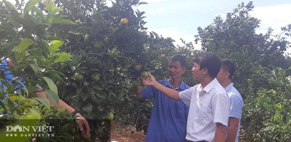 Ước mơ nhiều đời của nông dân Sơn La đang trở thành hiện thực - Ảnh 4.