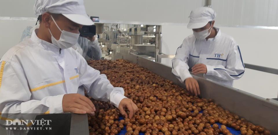 Nhà máy chế biến hoa quả tươi hiện đại nhất Tây Bắc chuẩn bị hoạt động - Ảnh 4.