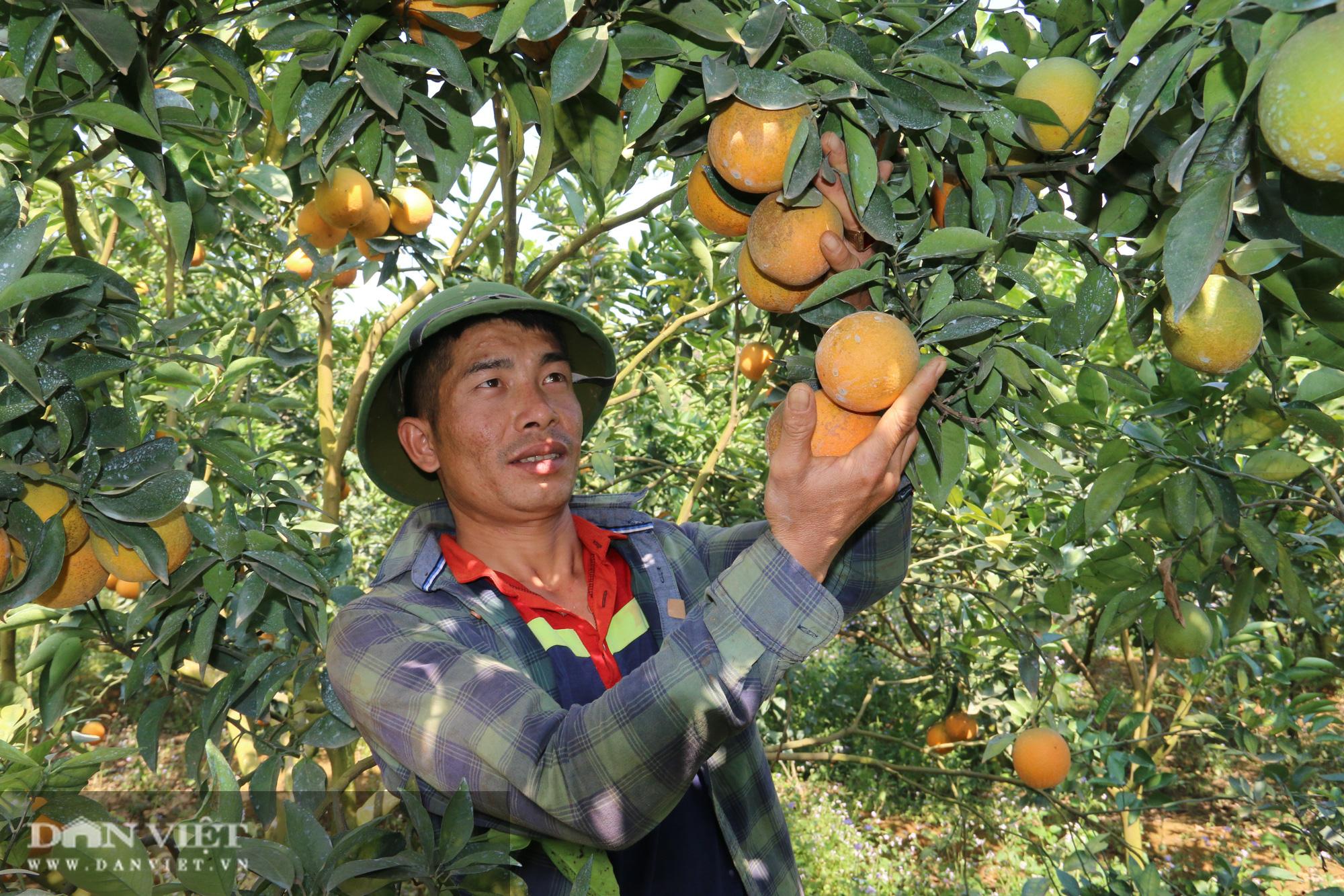 Ước mơ nhiều đời của nông dân Sơn La đang trở thành hiện thực - Ảnh 2.
