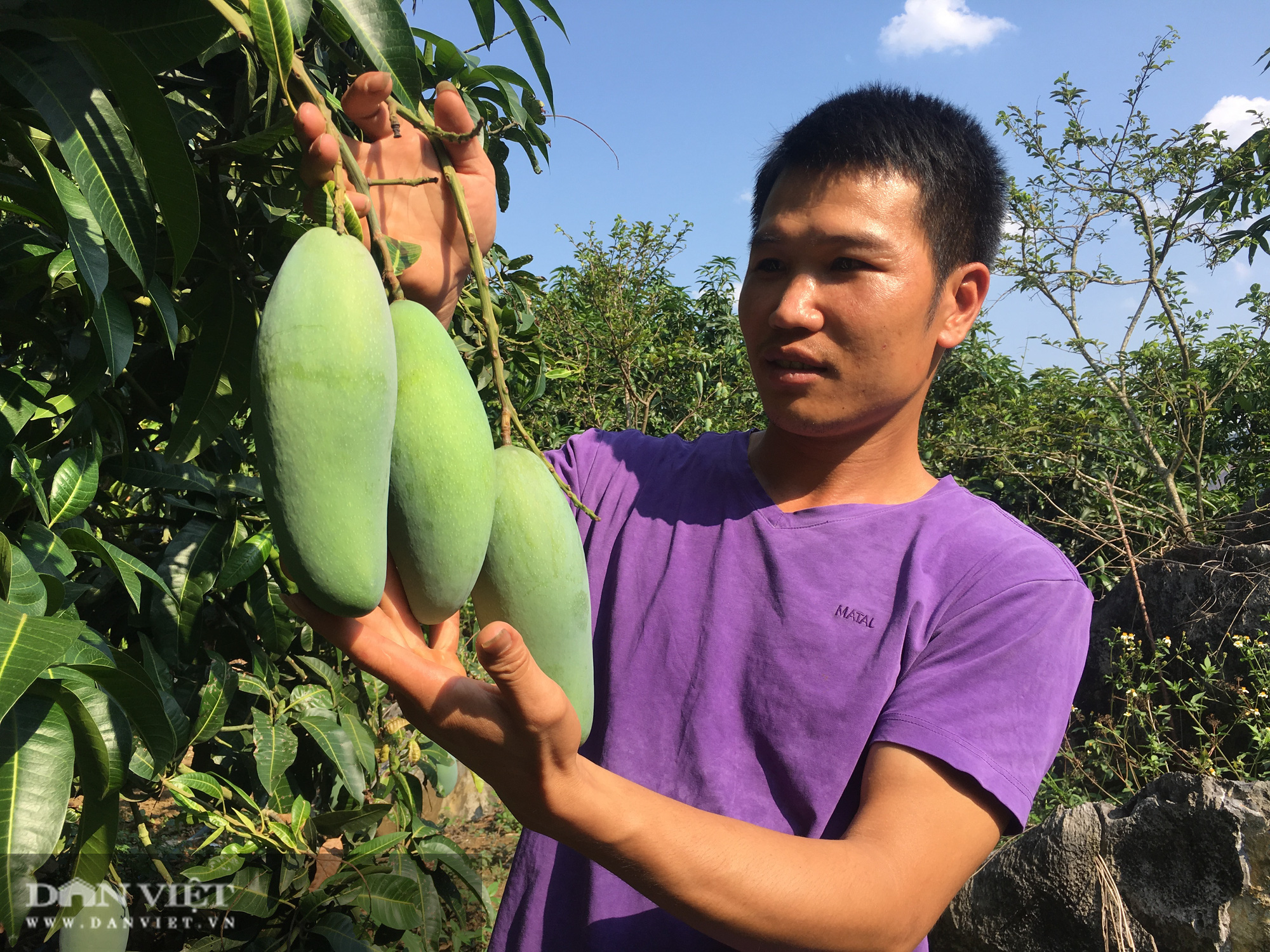 Ước mơ nhiều đời của nông dân Sơn La đang trở thành hiện thực - Ảnh 6.
