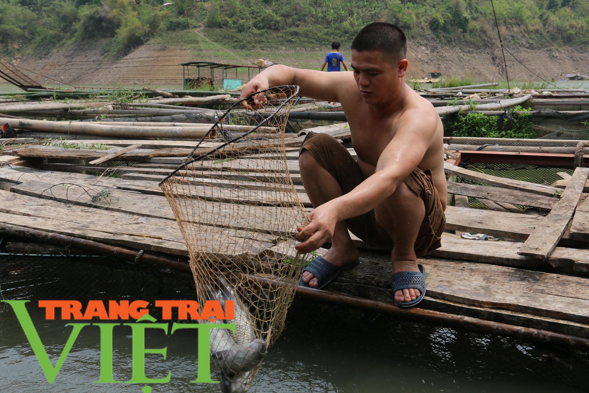 Nông dân vùng lòng hồ sông Đà khấm khá nhờ nuôi cá lồng - Ảnh 8.