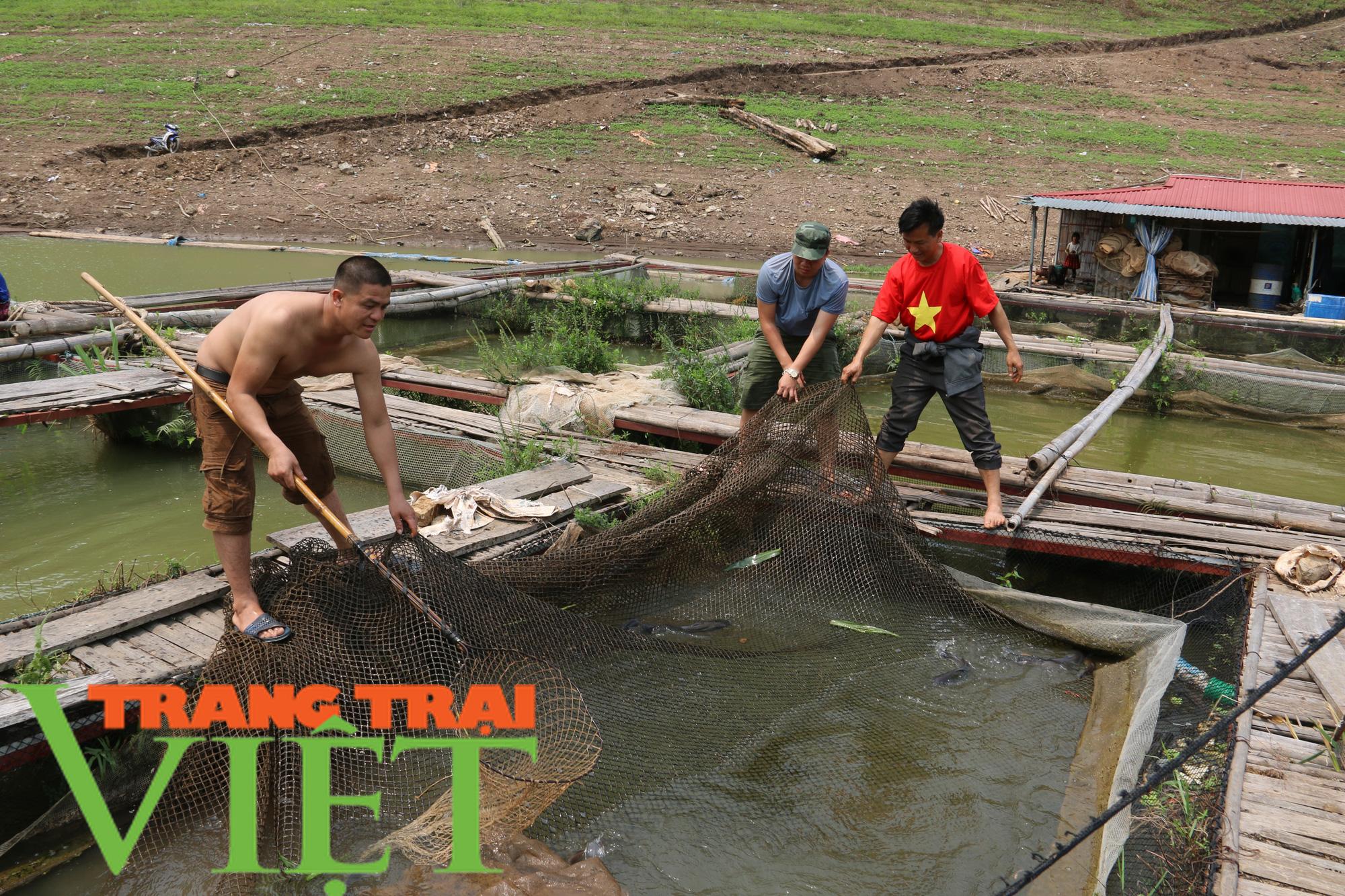 Nông dân vùng lòng hồ sông Đà khấm khá nhờ nuôi cá lồng - Ảnh 1.