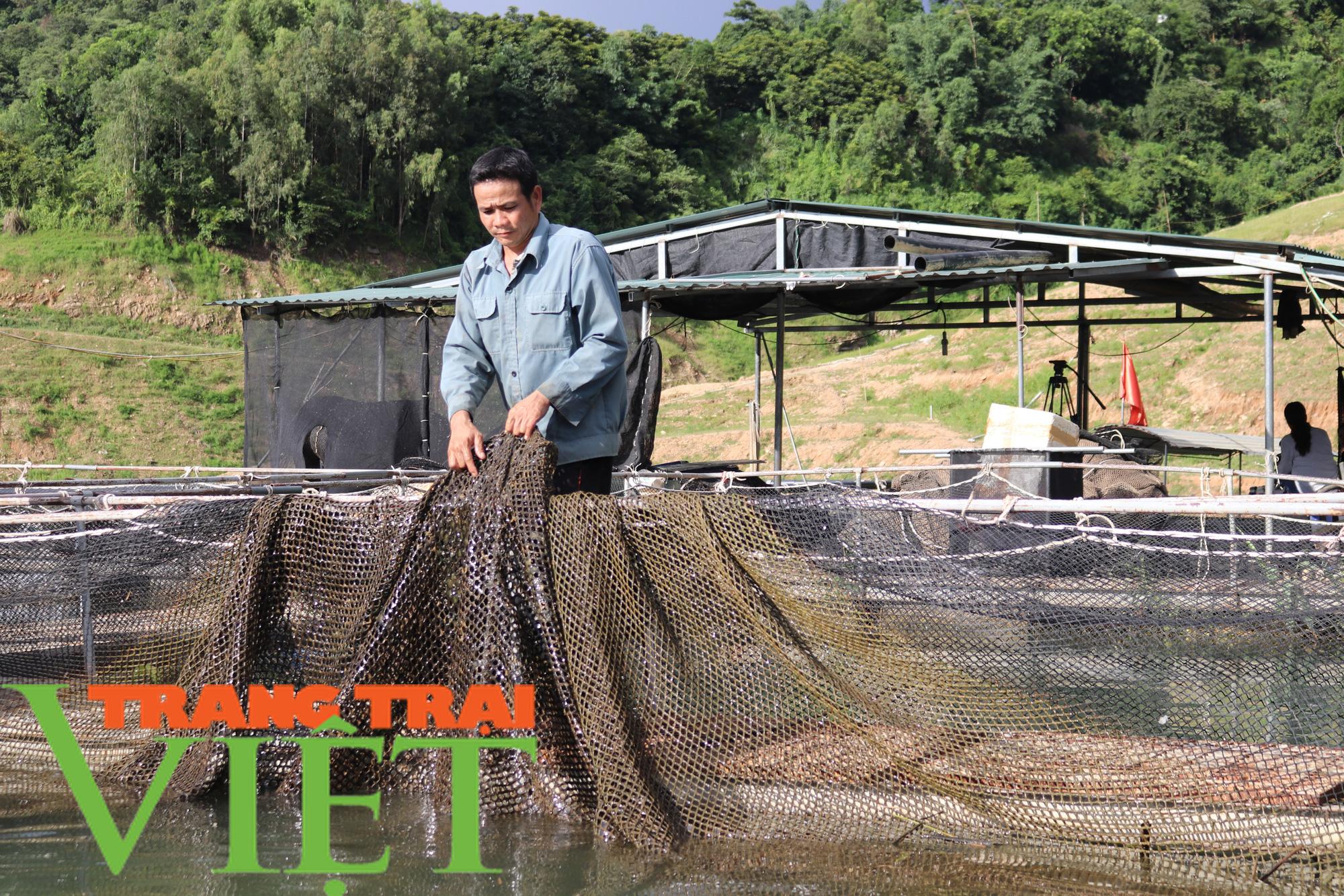 Nông dân vùng lòng hồ sông Đà khấm khá nhờ nuôi cá lồng - Ảnh 2.
