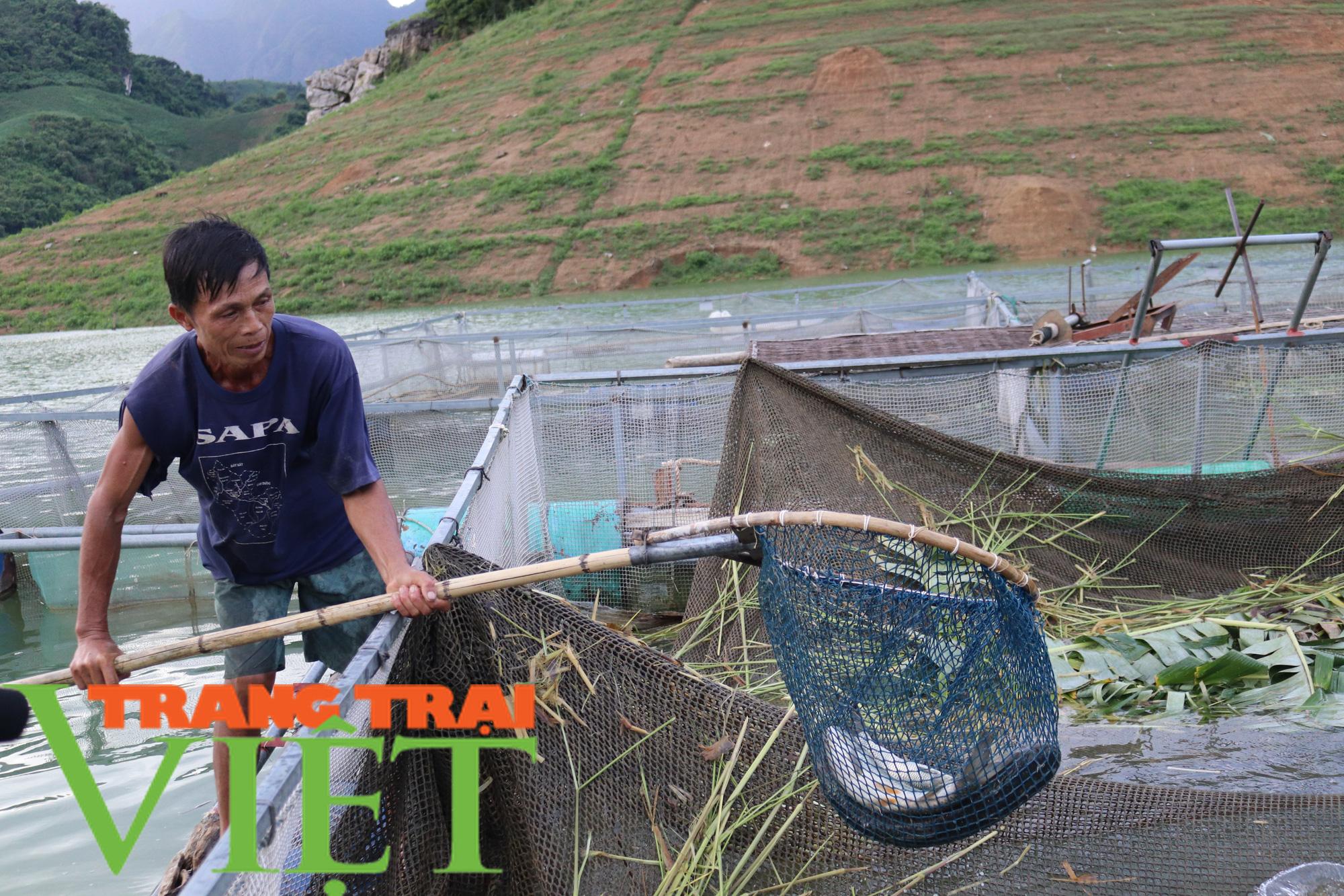 Nông dân vùng lòng hồ sông Đà khấm khá nhờ nuôi cá lồng - Ảnh 3.