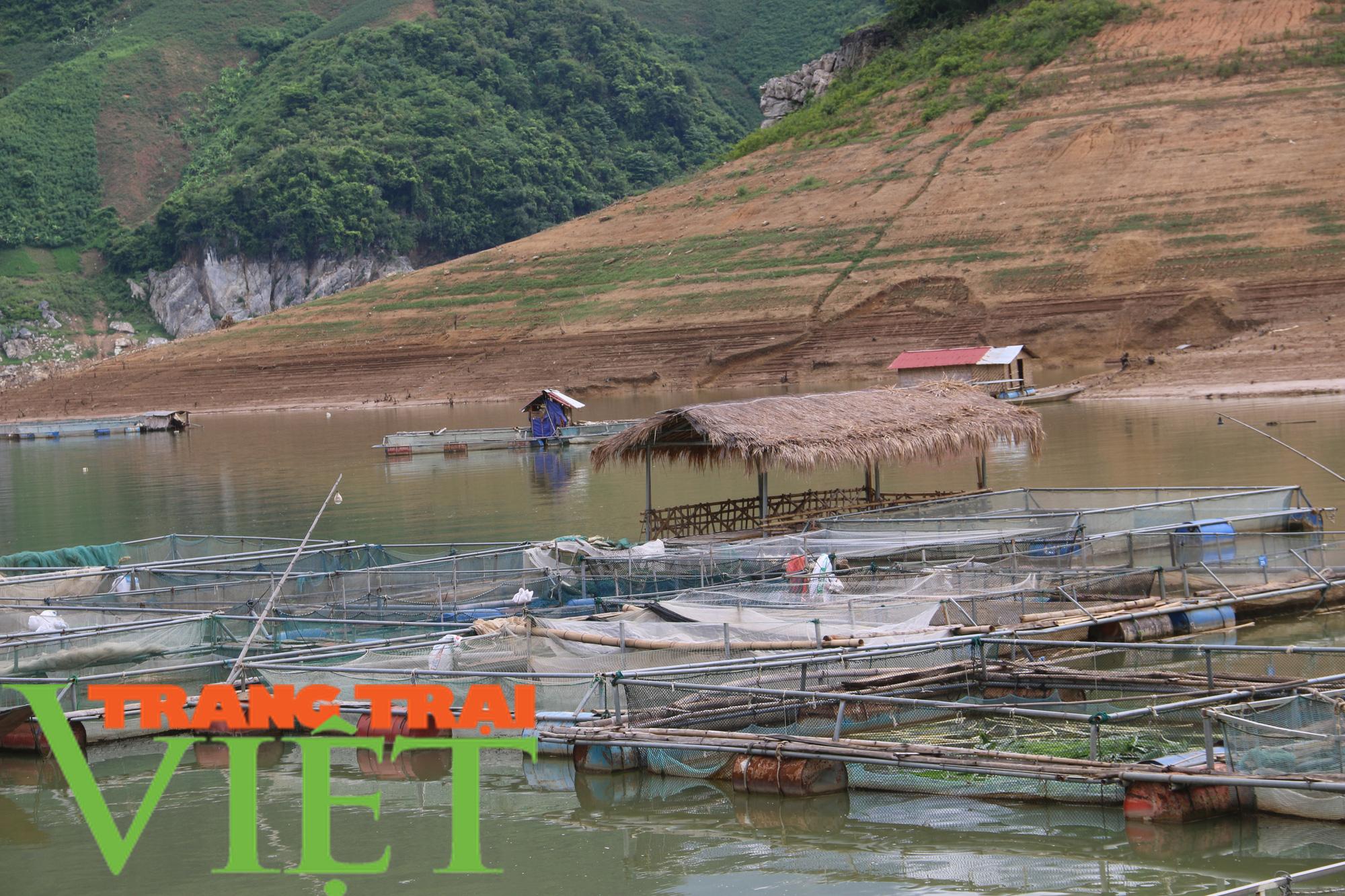 Nông dân vùng lòng hồ sông Đà khấm khá nhờ nuôi cá lồng - Ảnh 4.