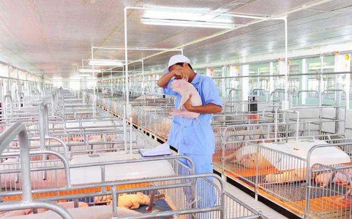 Doanh nghiệp đua nhau xây trại nuôi lợn, cần gấp nhân lực ngành chăn nuôi thú y - Ảnh 3.