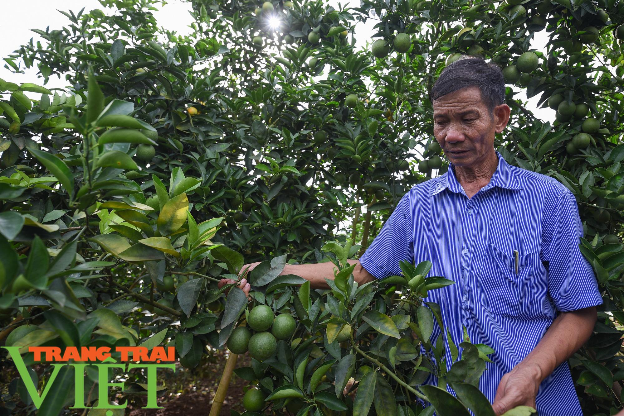 Nhà máy đi vào hoạt động sẽ giúp đảm bảo đầu ra cho nông sản Sơn La - Ảnh 7.