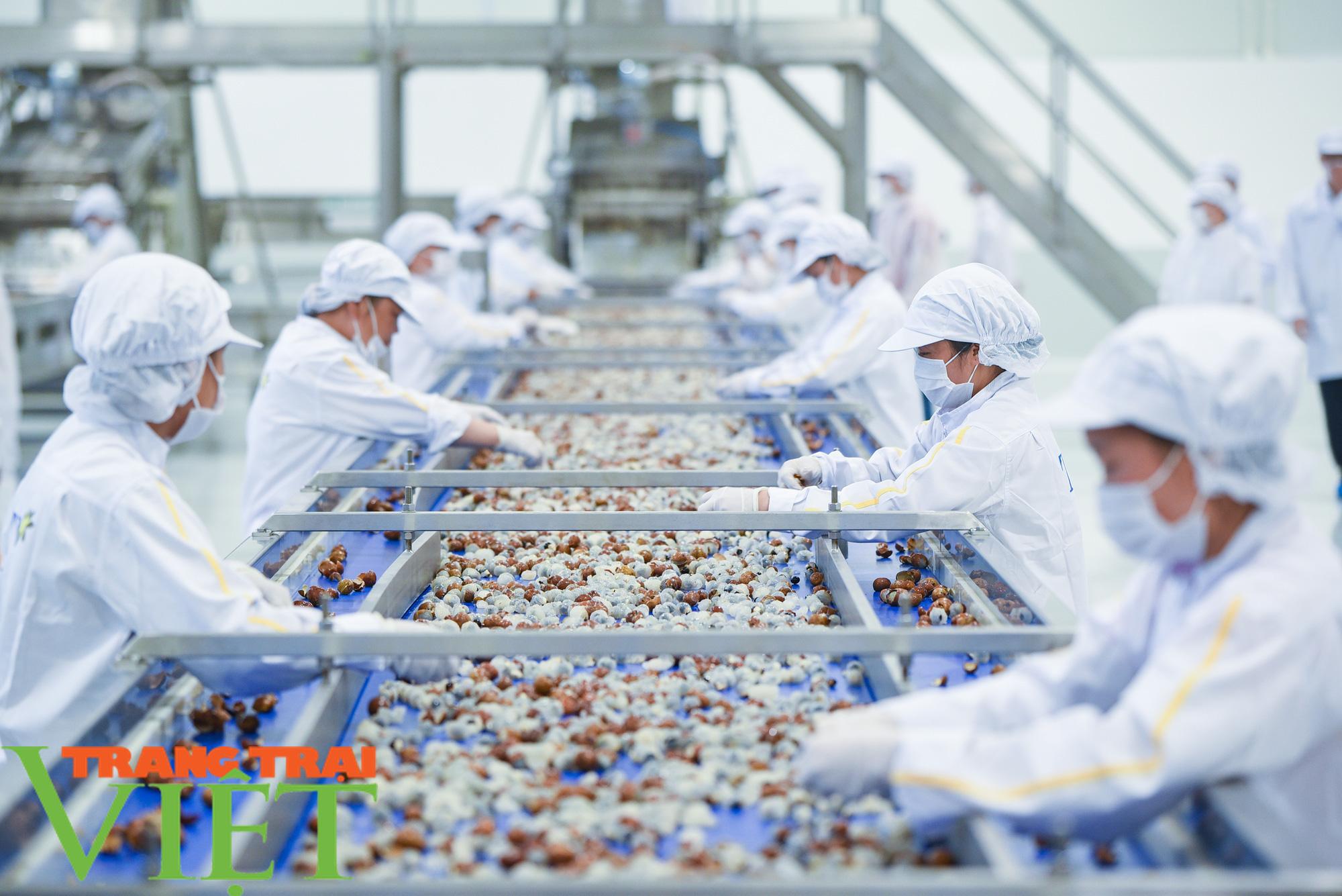 Nhà máy đi vào hoạt động sẽ giúp đảm bảo đầu ra cho nông sản Sơn La - Ảnh 2.