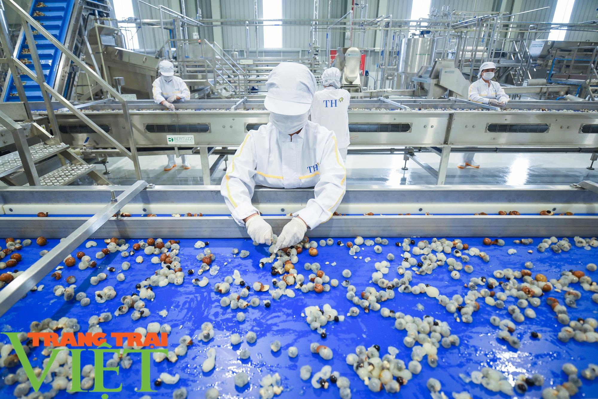 Nhà máy đi vào hoạt động sẽ giúp đảm bảo đầu ra cho nông sản Sơn La - Ảnh 5.