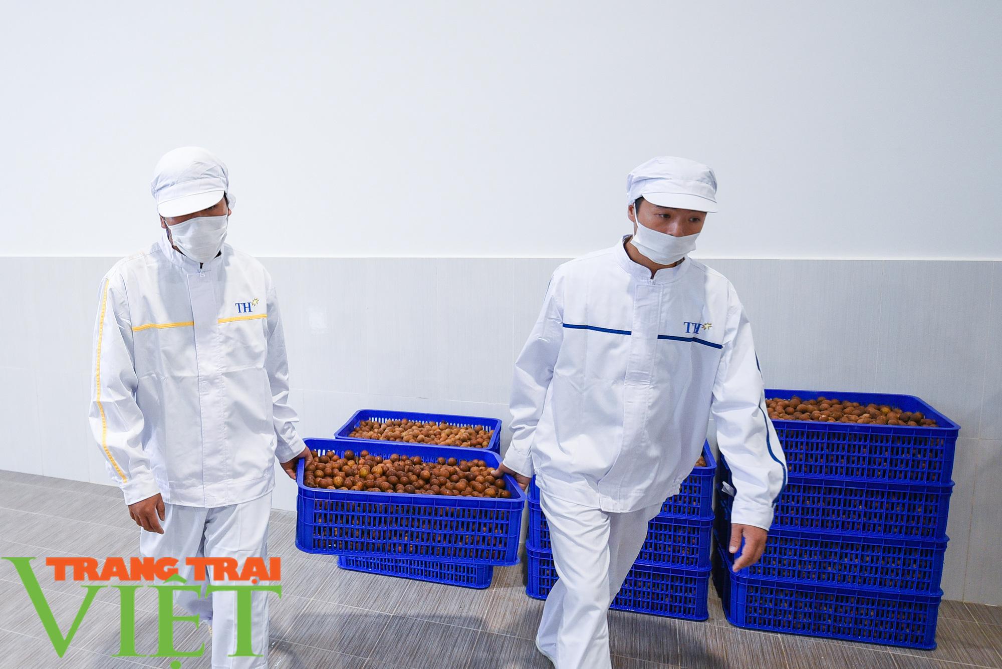 Nhà máy đi vào hoạt động sẽ giúp đảm bảo đầu ra cho nông sản Sơn La - Ảnh 8.