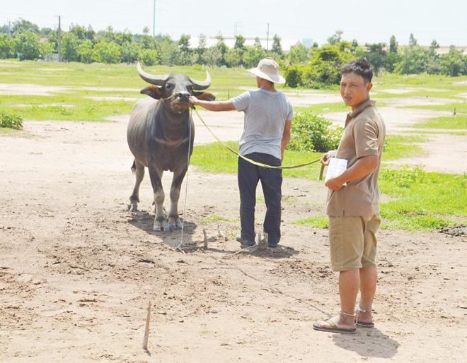 Bắt nhóm chuyên dùng xe tải trộm trâu, bò - Ảnh 1.