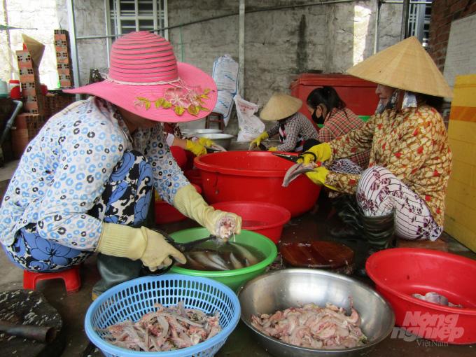 Giáo viên mầm non nuôi cá lóc khép kín lãi cả tỷ đồng - Ảnh 1.