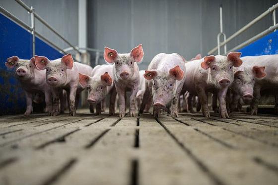 Trung Quốc xả 20.000 tấn thịt đông lạnh từ kho dự trữ quốc gia - Ảnh 1.