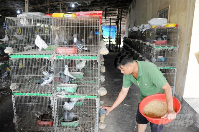 An Giang: Lãi gần nửa tỷ đồng/năm nhờ nuôi bồ câu - Ảnh 7.
