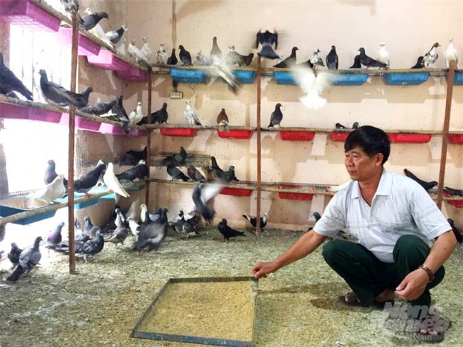 An Giang: Lãi gần nửa tỷ đồng/năm nhờ nuôi bồ câu - Ảnh 8.
