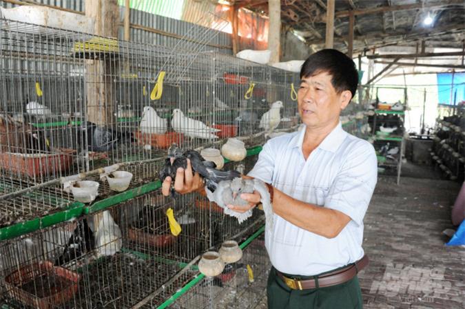 An Giang: Lãi gần nửa tỷ đồng/năm nhờ nuôi bồ câu - Ảnh 9.