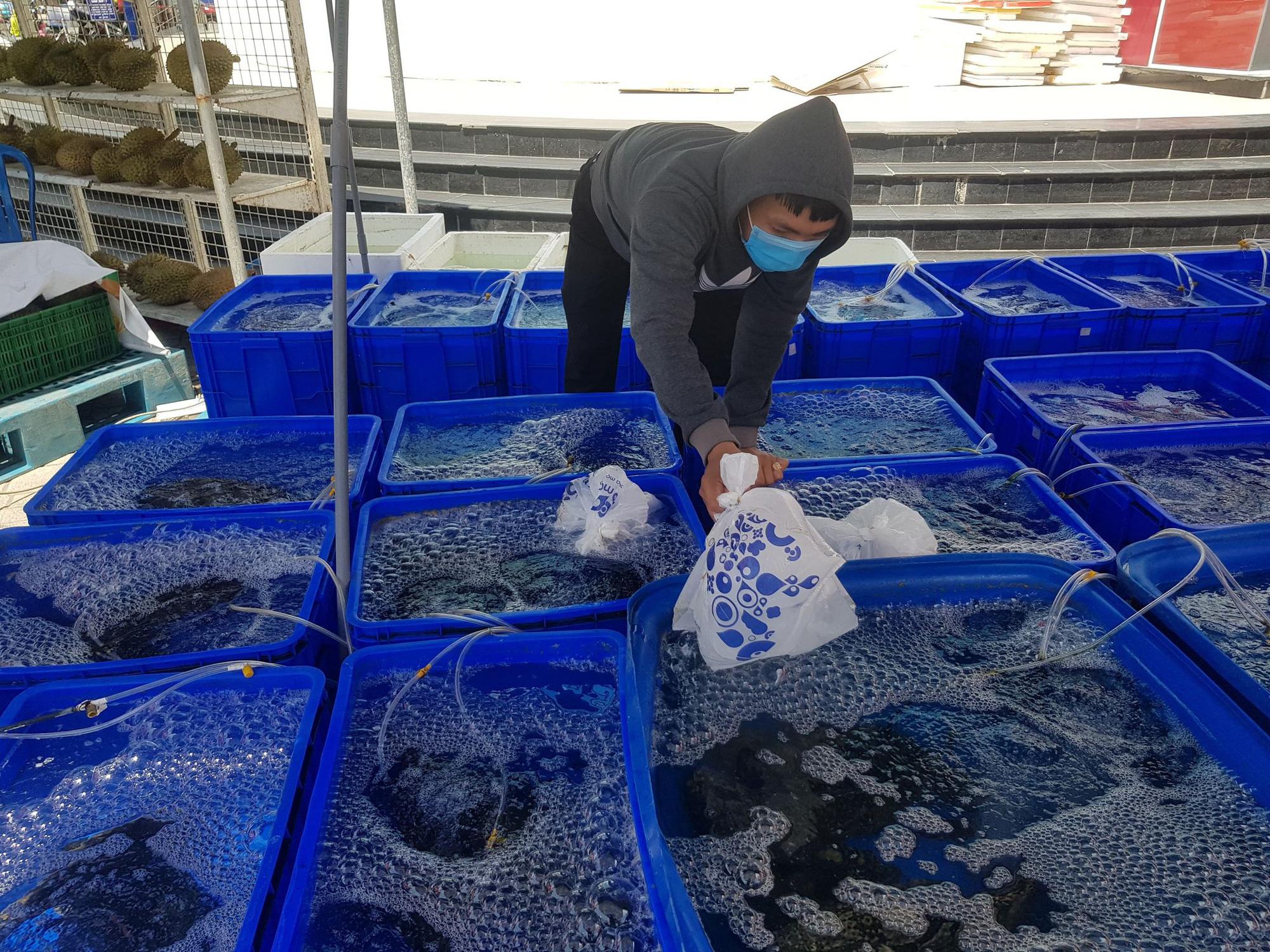 Cả ngàn tấn cá mú bí đầu ra, giá giảm một nửa vẫn khó giải cứu - Ảnh 2.