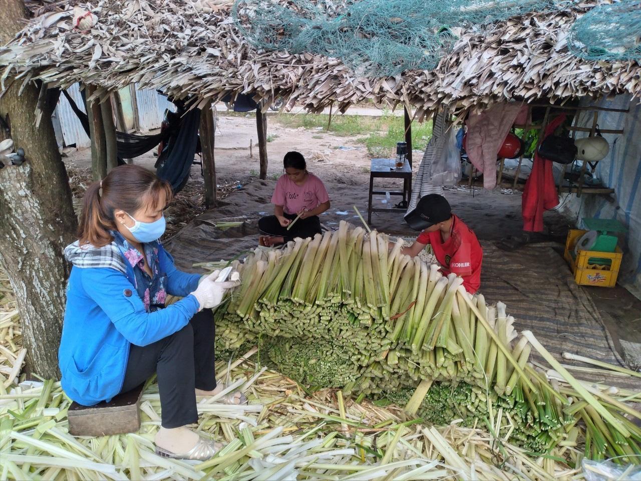 Cà Mau: Trồng thứ cây một thời xem như cỏ dại, rút đọt đon bán làm rau đặc sản mà dân mau khấm khá - Ảnh 1.