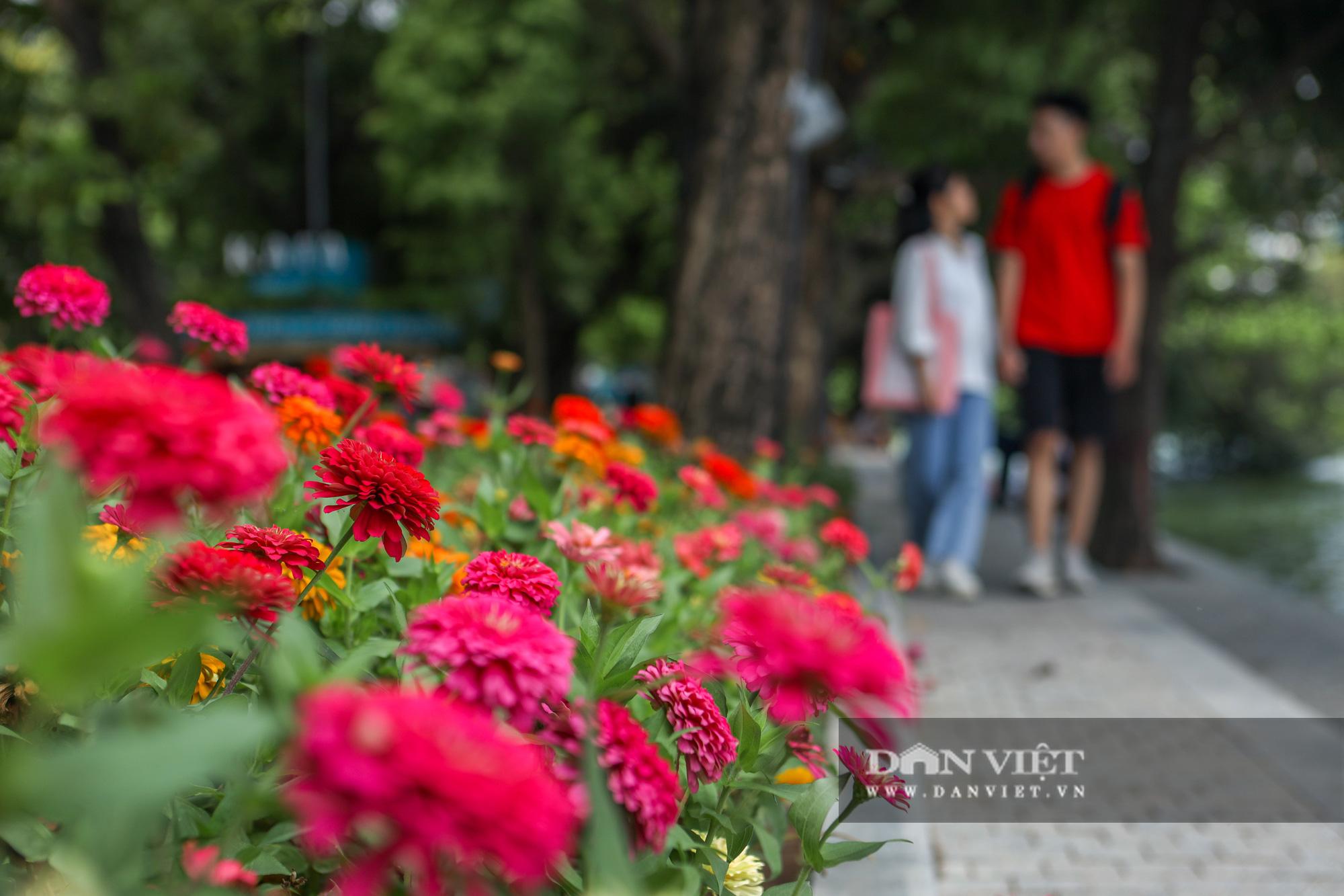Chiêm ngưỡng vườn hoa mới đẹp ngỡ ngàng bên bờ hồ Hoàn Kiếm  - Ảnh 2.