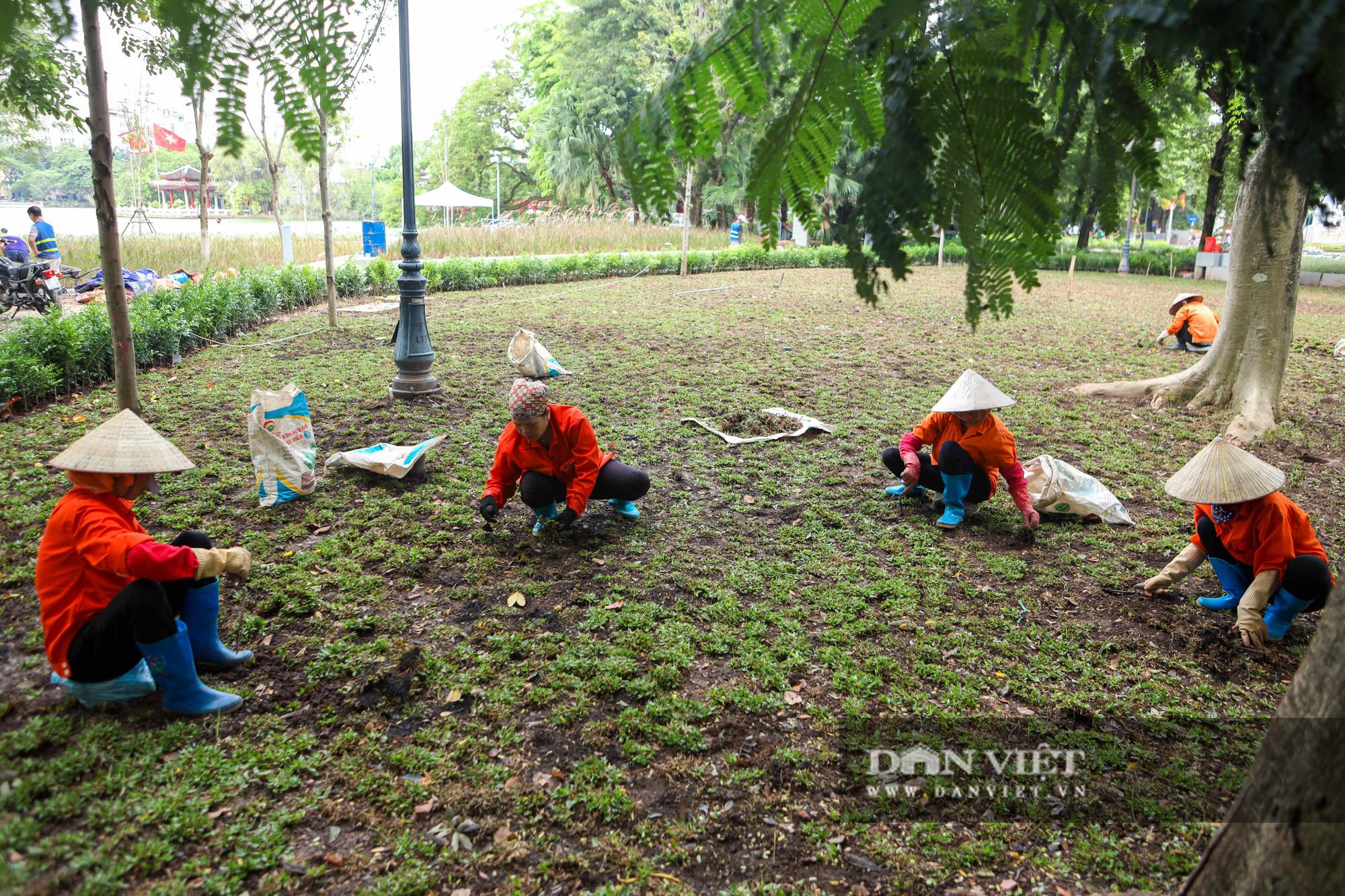 Chiêm ngưỡng vườn hoa mới đẹp ngỡ ngàng bên bờ hồ Hoàn Kiếm  - Ảnh 9.