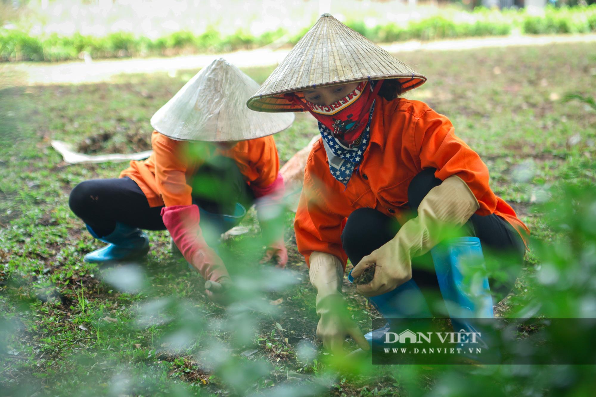 Chiêm ngưỡng vườn hoa mới đẹp ngỡ ngàng bên bờ hồ Hoàn Kiếm  - Ảnh 10.