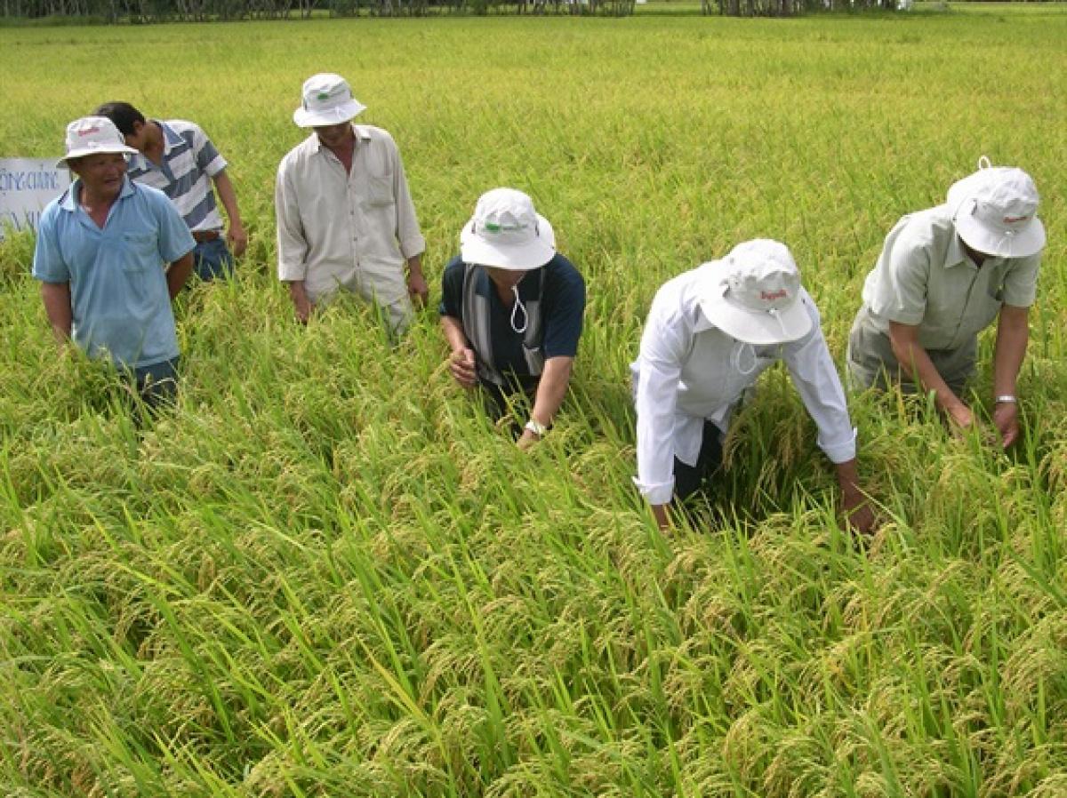 Thủ tướng Nguyễn Xuân Phúc: Nông nghiệp thể hiện vai trò trụ đỡ trong gian khó - Ảnh 2.
