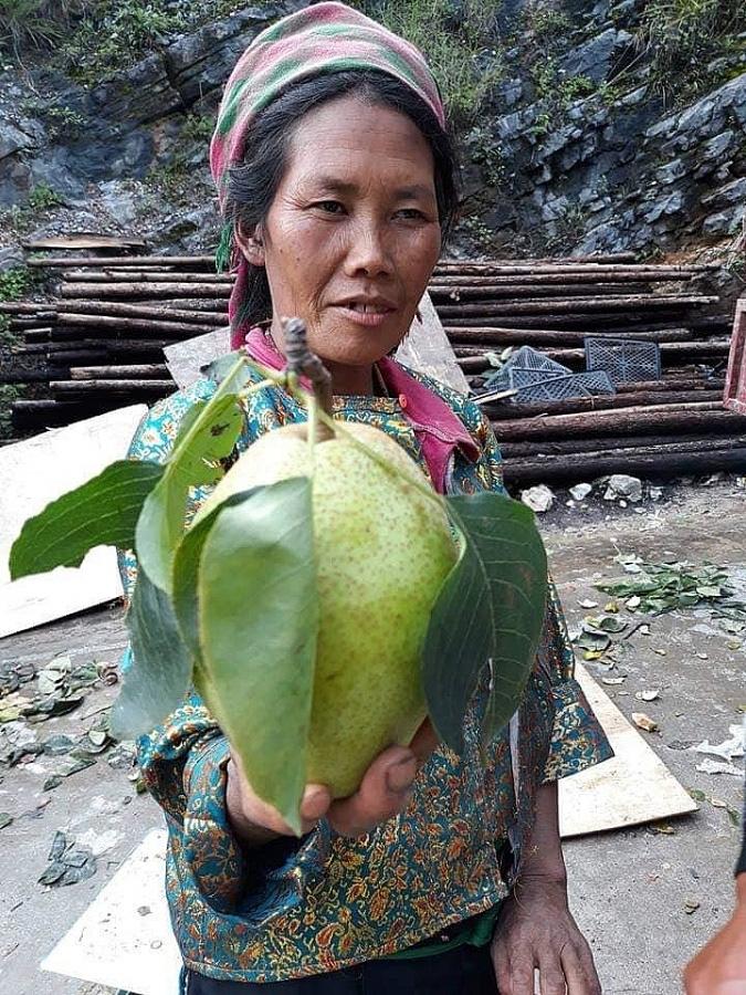 Hà Giang: Loại quả đặc sản mát lịm tim, ngọt như đường, giá đắt vẫn đánh dạt hàng Trung Quốc - Ảnh 1.