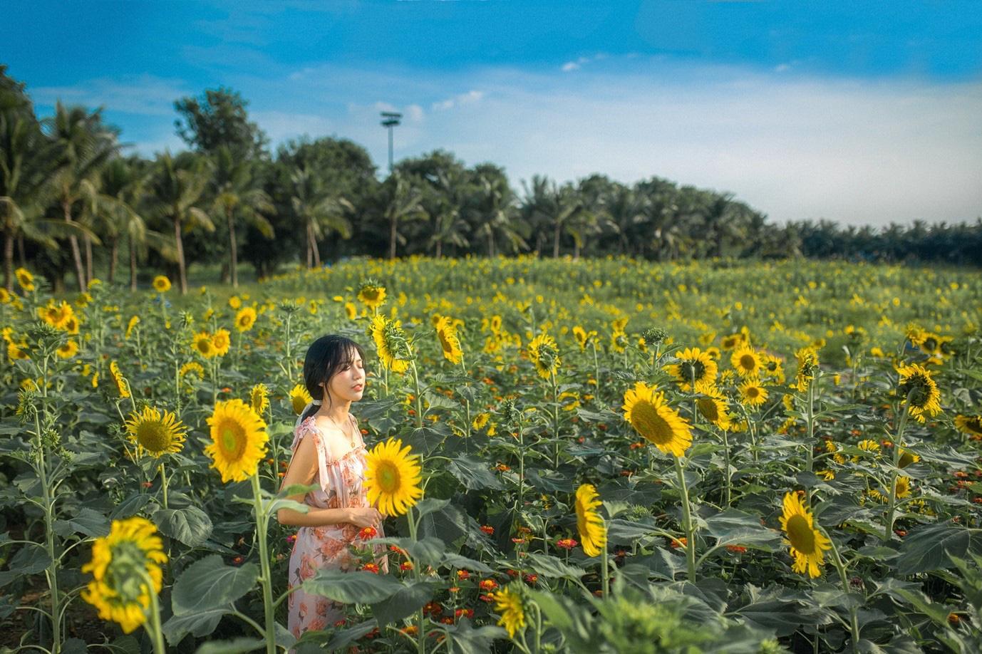 Đồi hoa mặt trời Ecopark khoe sắc đón thu sang - Ảnh 1.