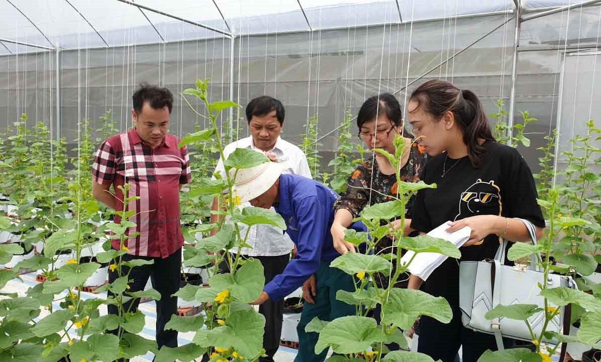 """""""Làn sóng"""" làm nông nghiệp công nghệ cao ở Quảng Ninh  - Ảnh 1."""