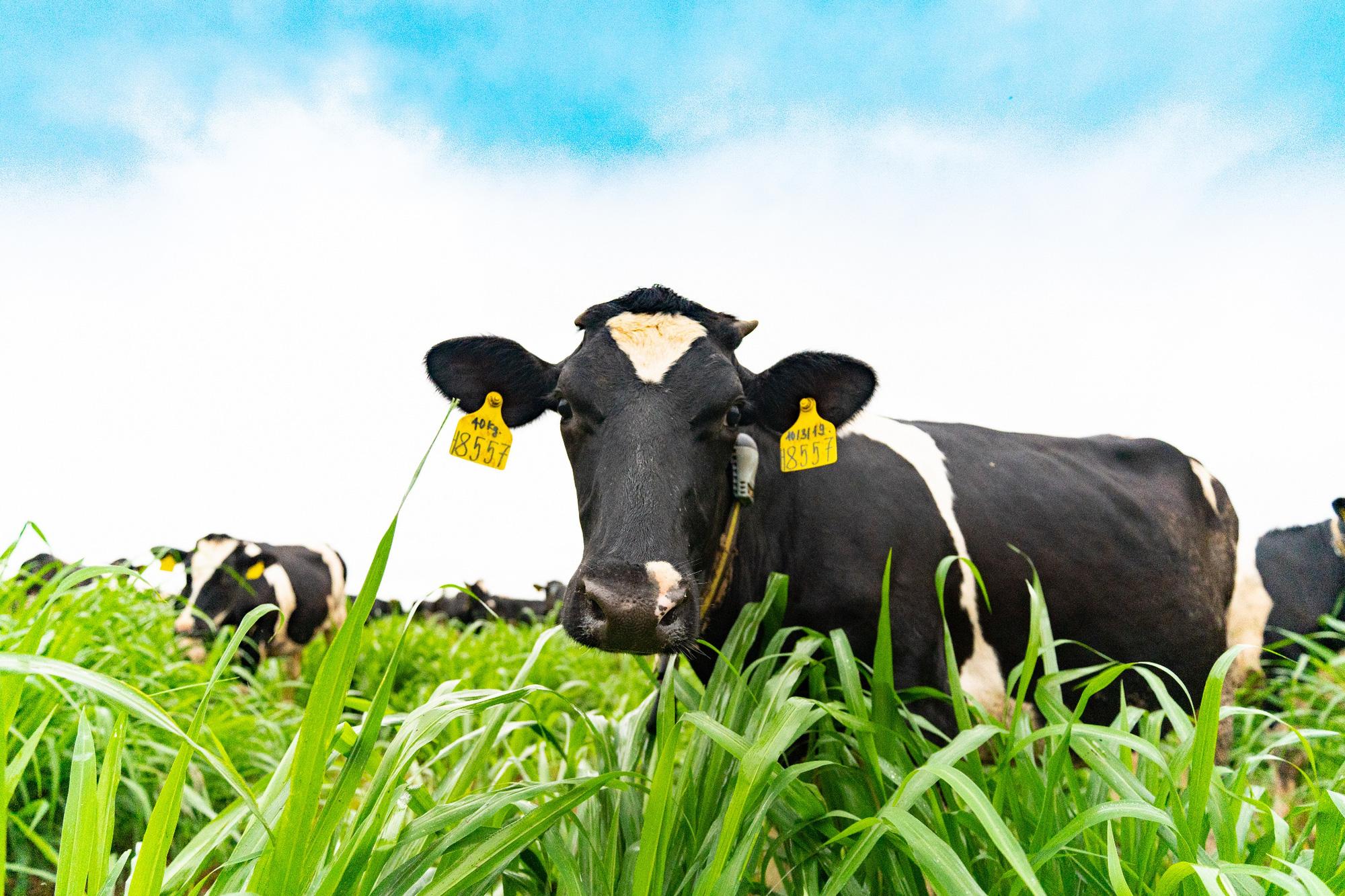 Sữa tươi chuẩn ngoại nhập – dấu ấn mới của NutiFood - Ảnh 3.