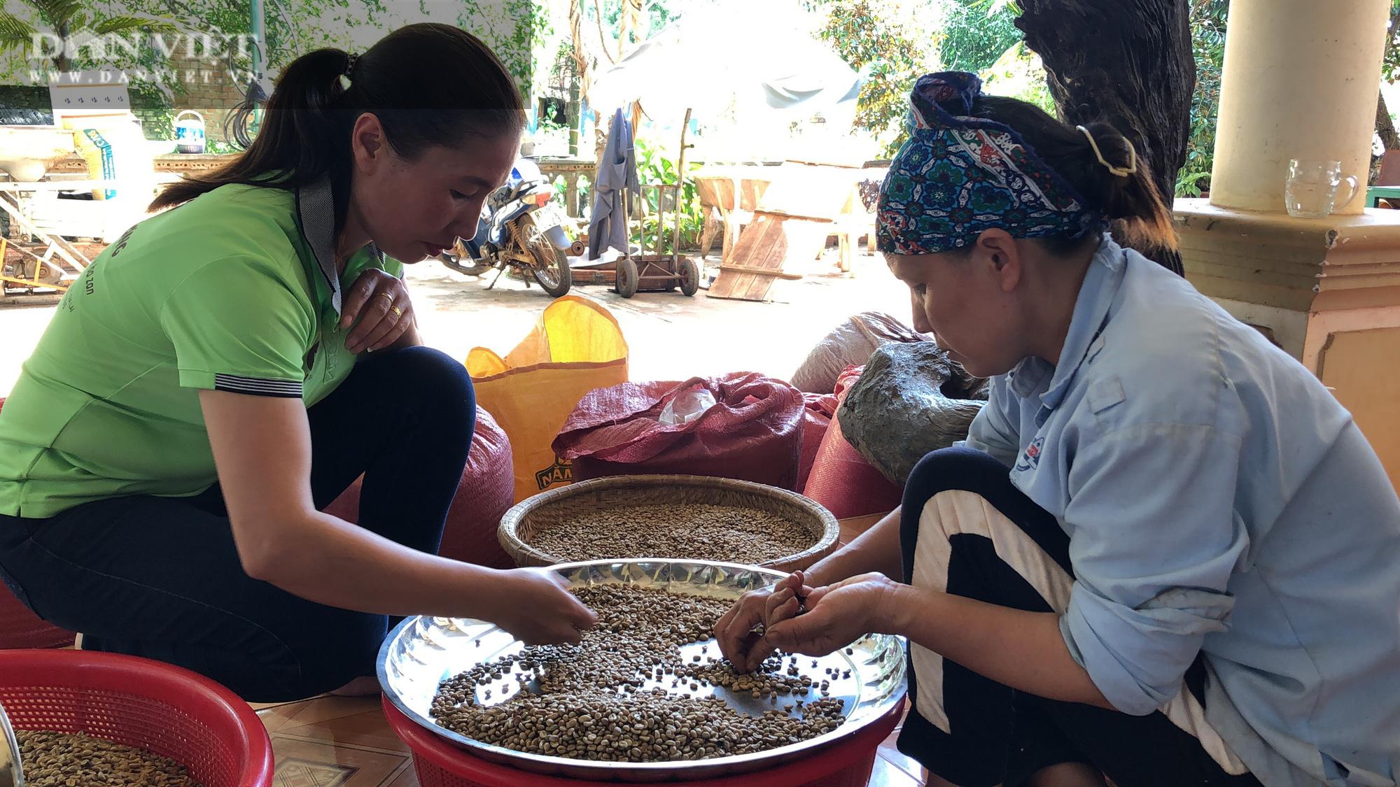 Người phụ nữ chân đất thu hơn 2 tỷ/năm với 5ha cà phê sạch - Ảnh 6.
