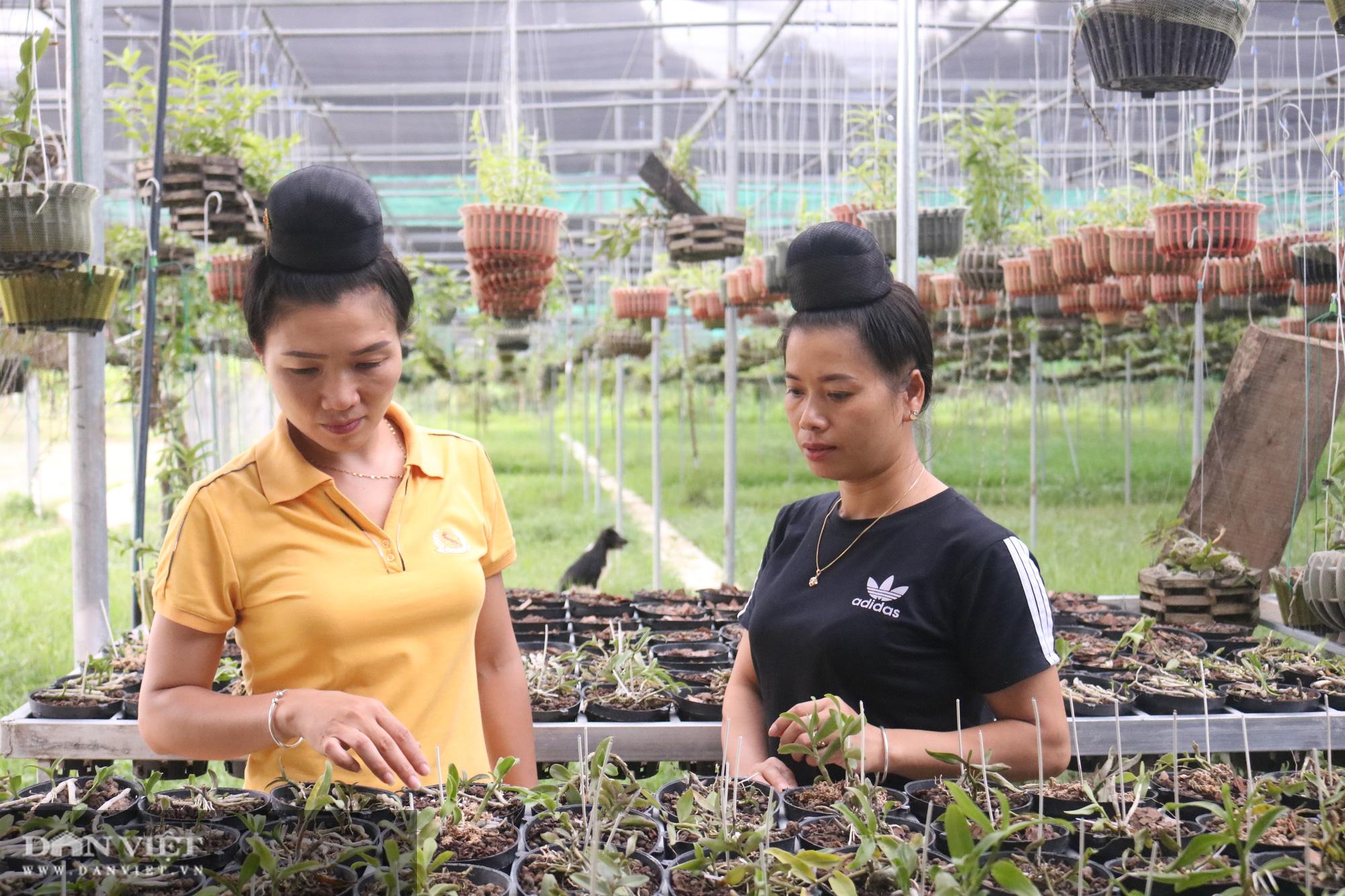 Gái Thái thu hơn 500 triệu đồng mỗi năm từ trồng lan rừng - Ảnh 2.