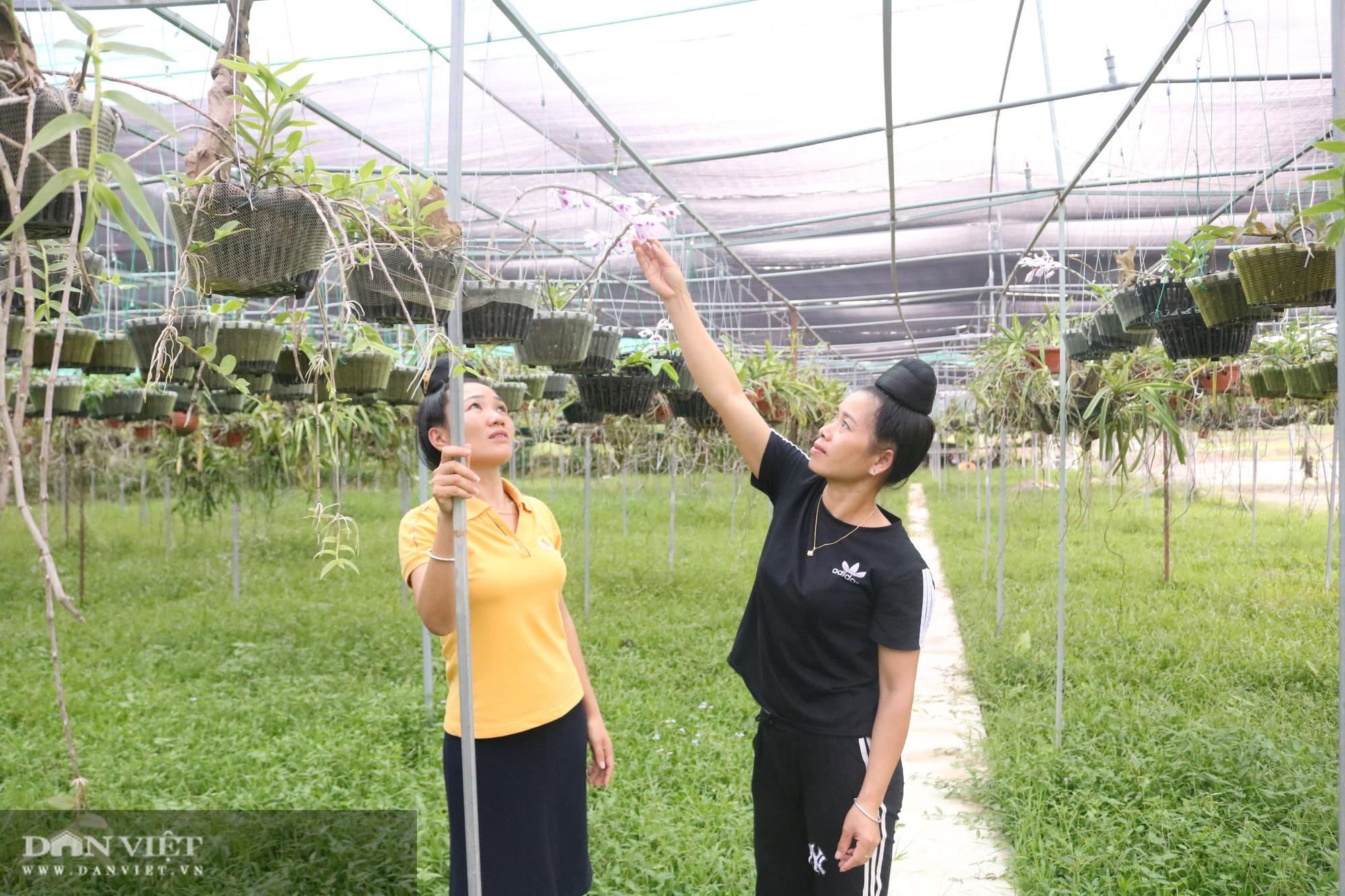 Gái Thái thu hơn 500 triệu đồng mỗi năm từ trồng lan rừng - Ảnh 1.