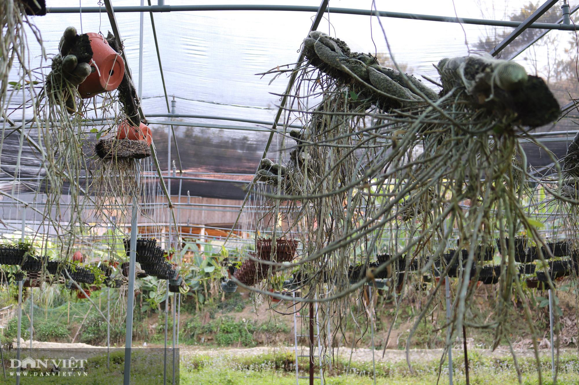 Gái Thái thu hơn 500 triệu đồng mỗi năm từ trồng lan rừng - Ảnh 3.