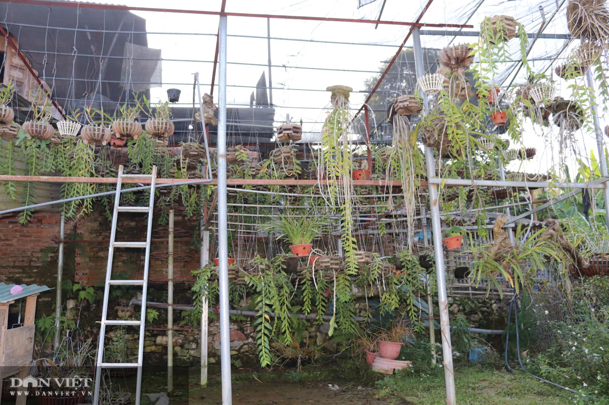 Gái Thái thu hơn 500 triệu đồng mỗi năm từ trồng lan rừng - Ảnh 5.