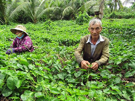 Hậu Giang: Tình cờ mang loài cây lạ về trồng, ra thứ hoa đặc sản, mỗi ngày kiếm 400-500 ngàn đồng - Ảnh 1.