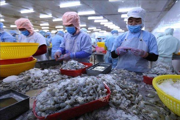 Xuất khẩu tôm, cá ngừ sang EU tăng chóng mặt - Ảnh 1.