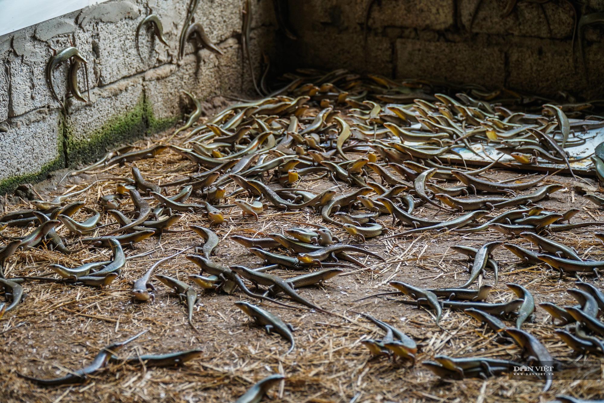 Trai xứ Thanh thu lãi hàng tỷ mỗi năm nhờ nuôi 5 loài ít khi bị mắc bệnh - Ảnh 12.