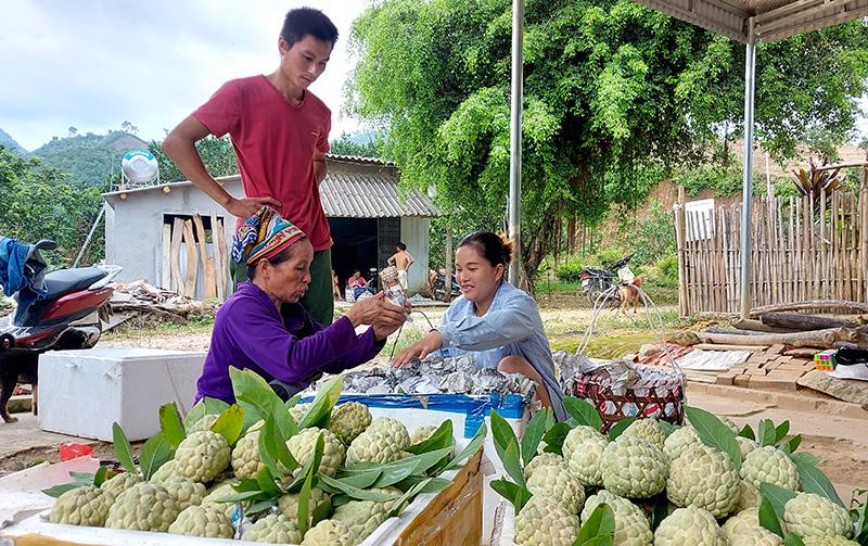 Tuyên Quang: Vùng đất dân đổi đời nhờ trồng cây na thấp tè mà ra toàn quả to bự - Ảnh 2.
