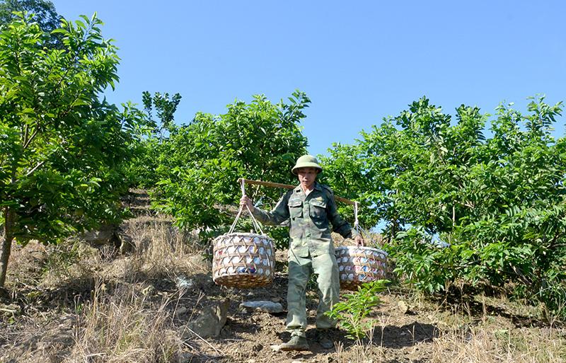 Tuyên Quang: Vùng đất dân đổi đời nhờ trồng cây na thấp tè mà ra toàn quả to bự - Ảnh 4.