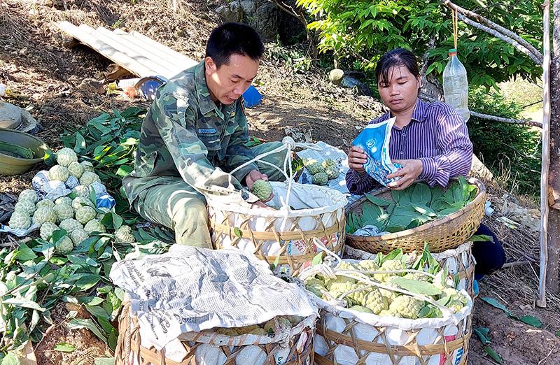 Tuyên Quang: Vùng đất dân đổi đời nhờ trồng cây na thấp tè mà ra toàn quả to bự - Ảnh 5.