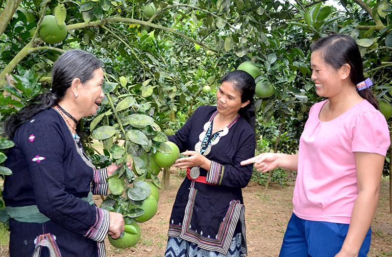 Tuyên Quang: Vùng đất dân đổi đời nhờ trồng cây na thấp tè mà ra toàn quả to bự - Ảnh 6.