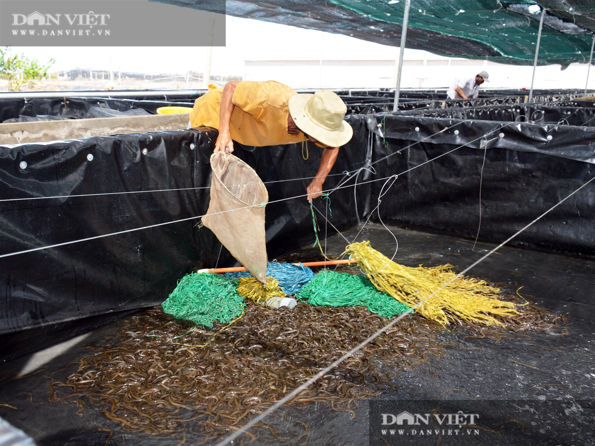 Bạc Liêu: Chàng kỹ sư bỏ công ty nước ngoài về làm nông dân nuôi 15 loài thủy sản - Ảnh 6.
